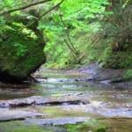 奥養老渓谷グランピングリゾート花山水 - サムネイル2